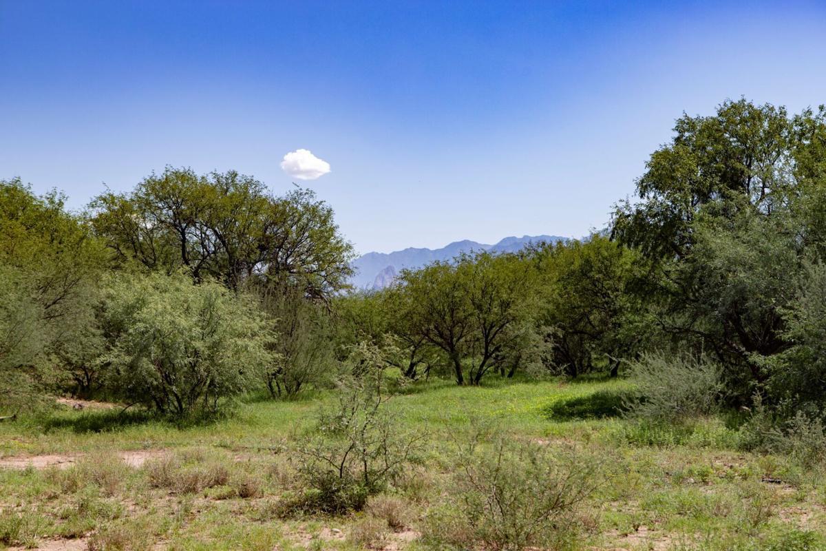 Sopori Ranch