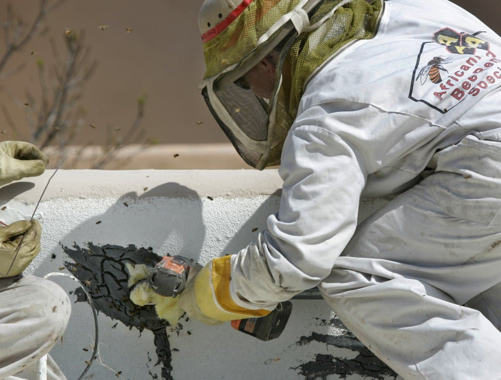 Be wary of bees entering home's rafters