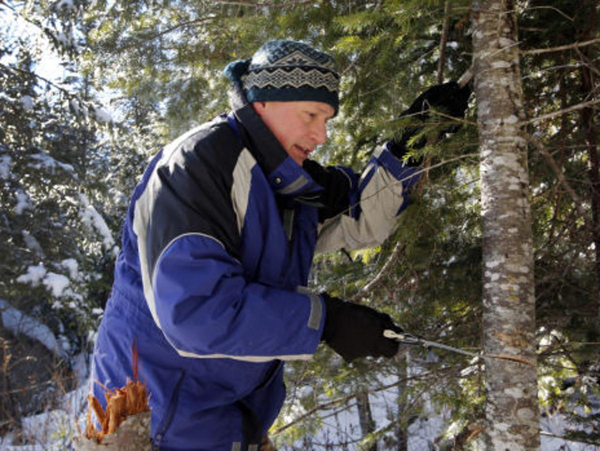 Prescott National Forest Christmas Tree Permits 2021 State Briefs Thousands Buy Permits In Arizona To Cut Down Christmas Trees Ap Tucson Com