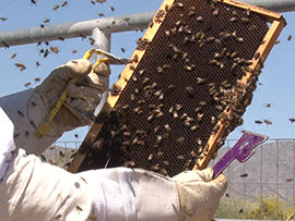 Commercial beekeepers must adjust as honey production slows
