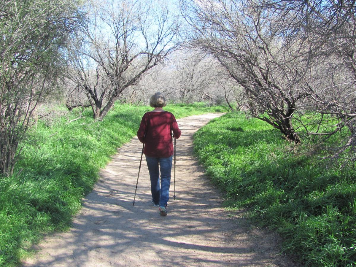 Hiker in green landscape