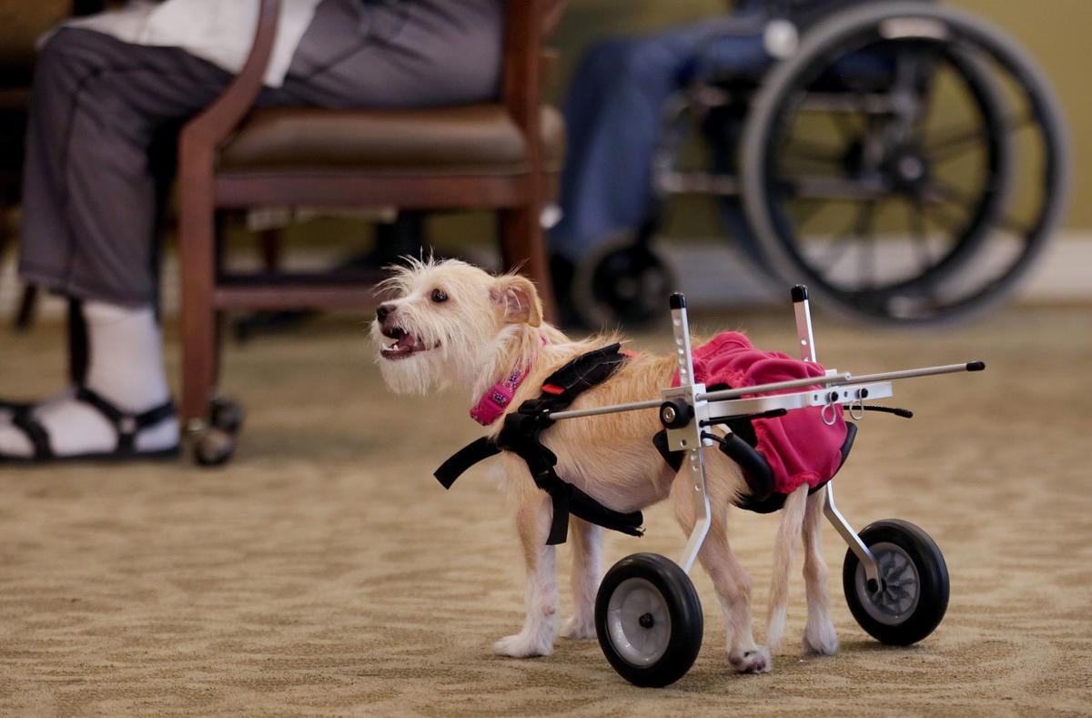 Rescue dog delights seniors