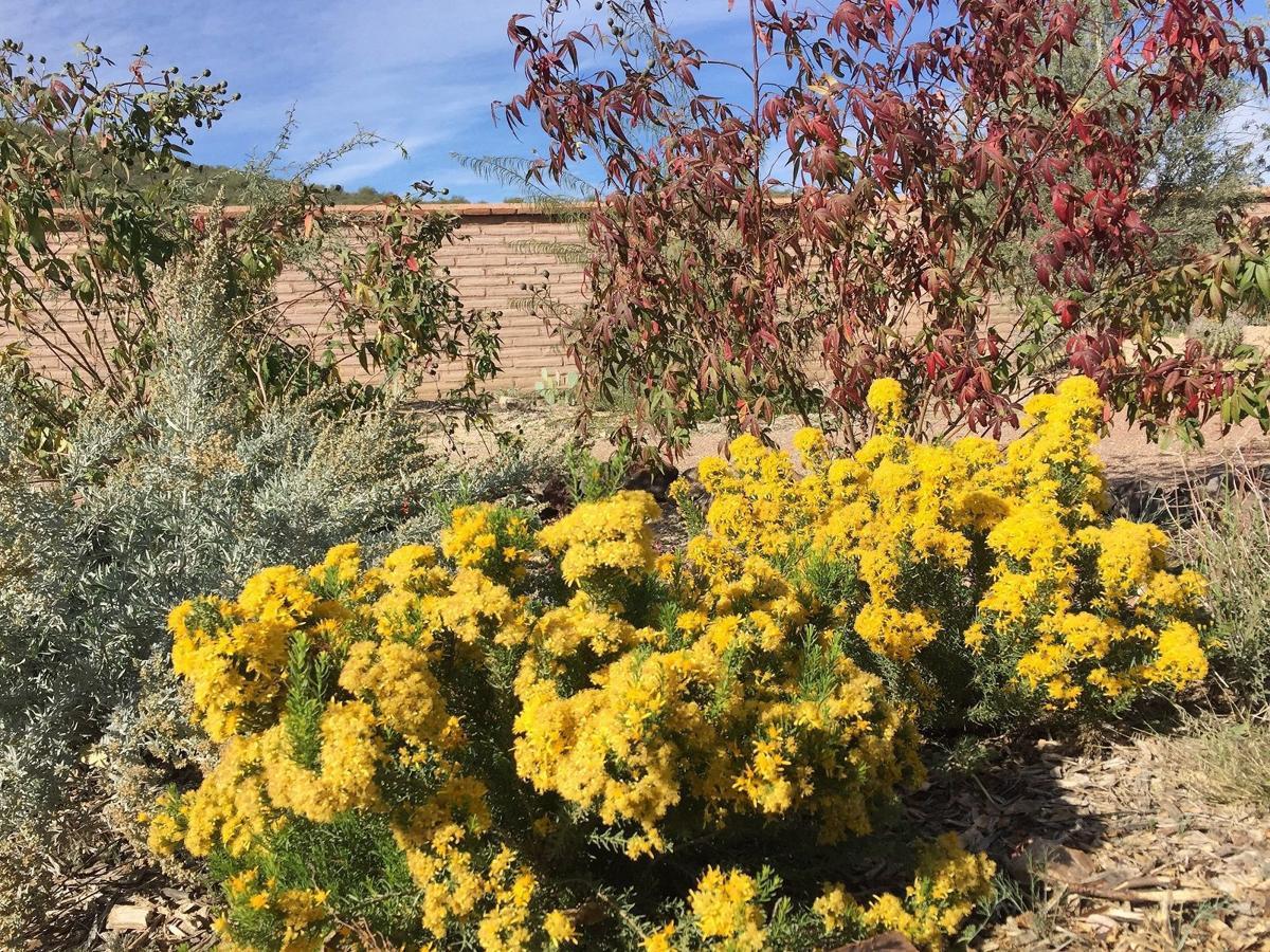 Mission Garden's Medicinal Herbs