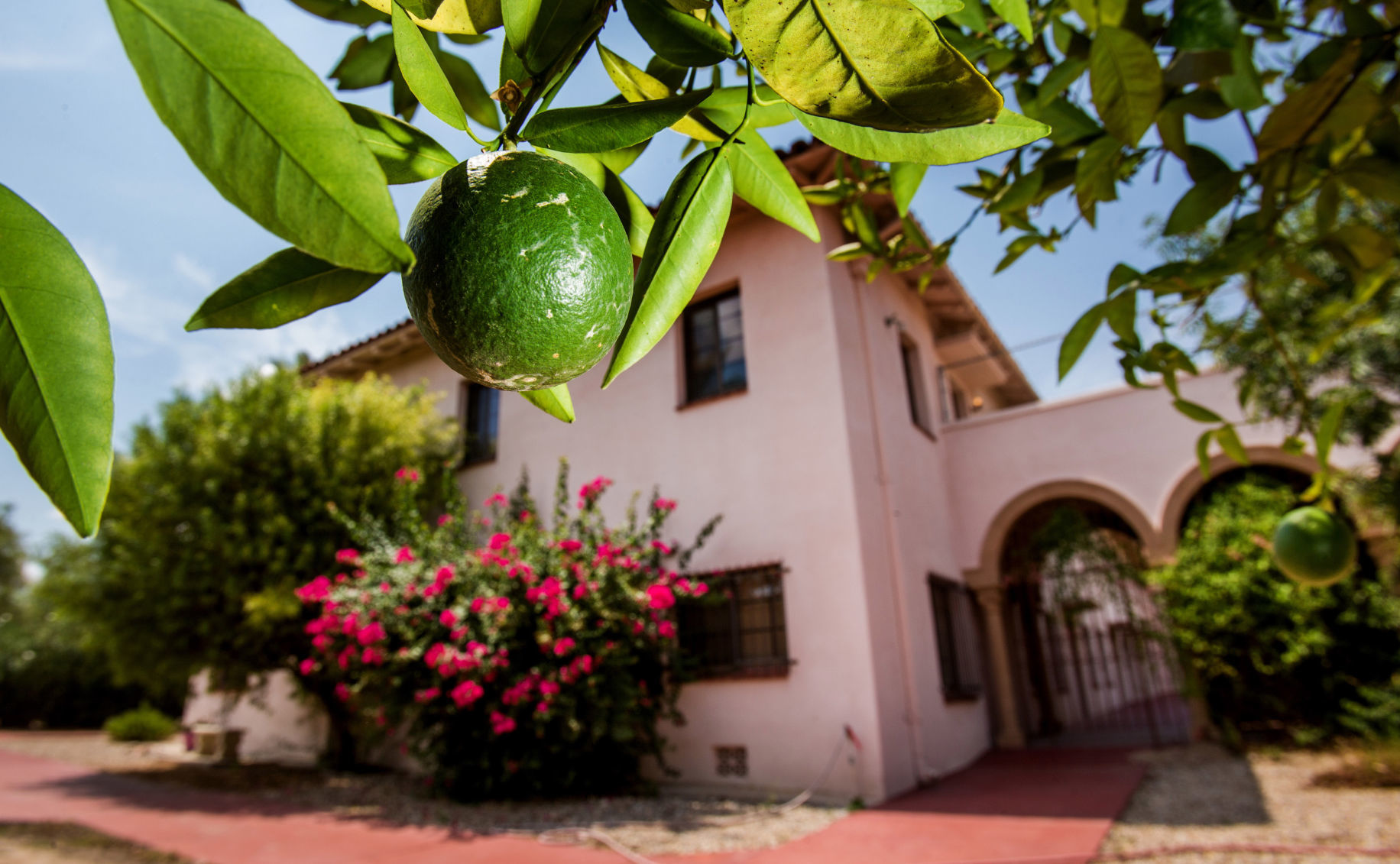 Some historic trees at Tucson monastery trees will be saved | Tucson.com