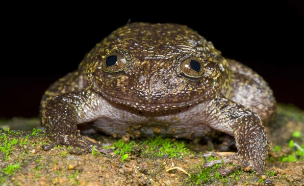 India team uncovers 12 frog species
