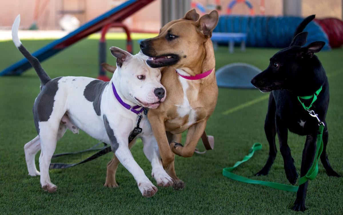 Humane Society Canine Behavior Team