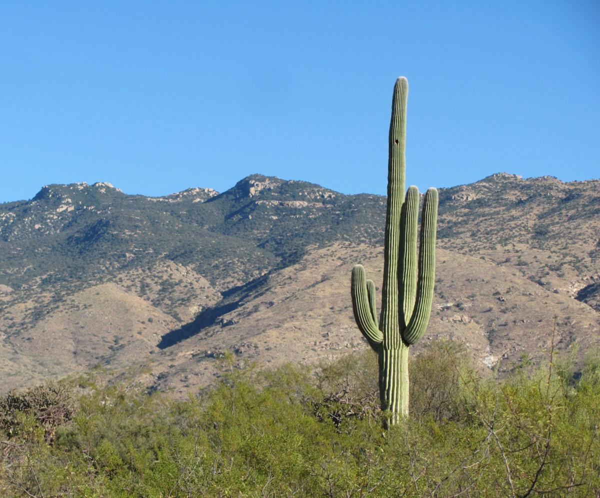 Desert Ecology Trail