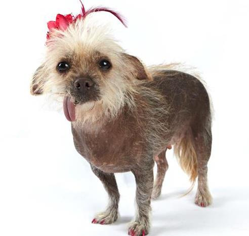 Tucson mutt too cute to win ugly dog honors | Local news ...