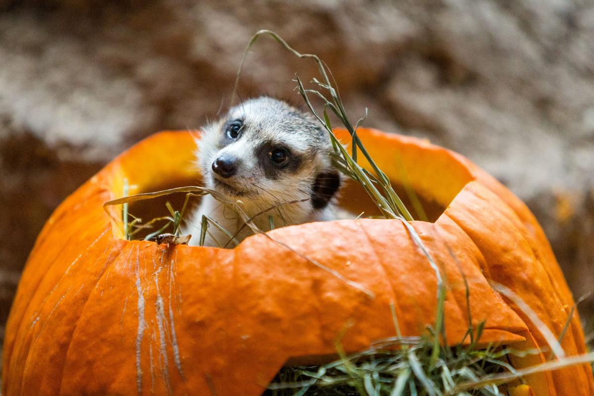 Photos: Halloween is everywhere | Latest entertainment and