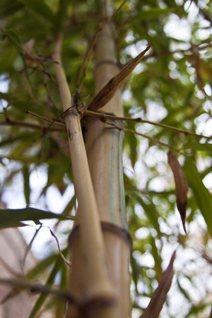 If that's bamboo, this must be ... Tucson?