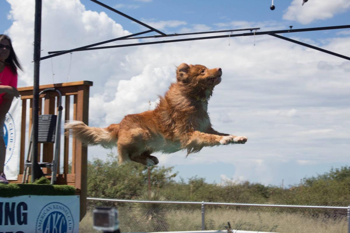 Dog Show At Pima County Fairgrounds November