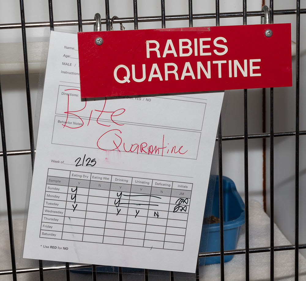 Rise in Arizona rabies cases expected to continue through the summer