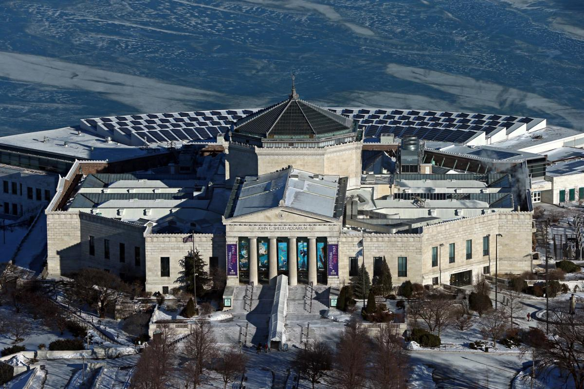 A view of the Shedd Aquarium in Chicago, which has been streaming footage of their penguins.