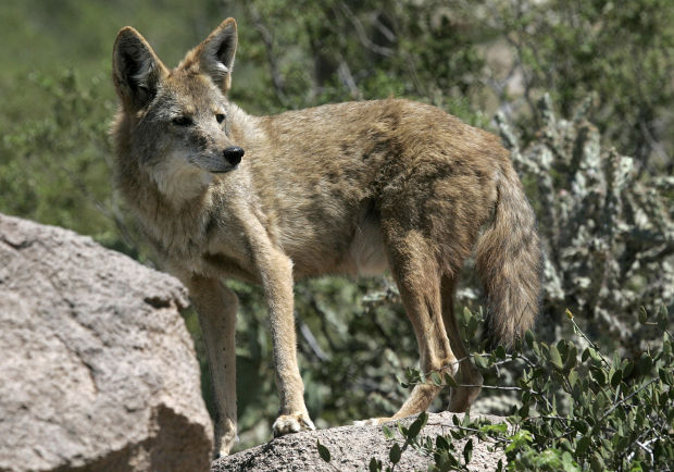 Star Auto Parts >> Photos: Animals at the Arizona Sonora Desert Museum