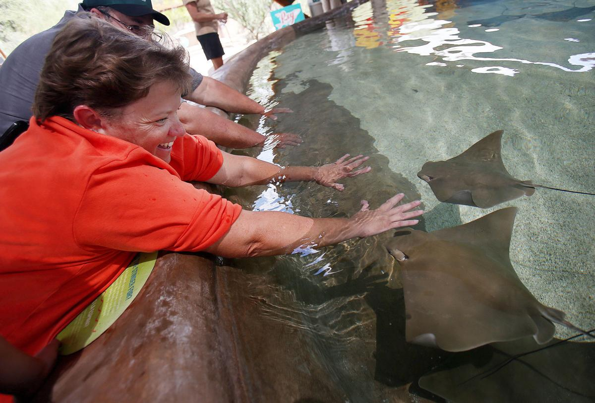 Touch and feed stingrays at the Desert Museum | Hiking and