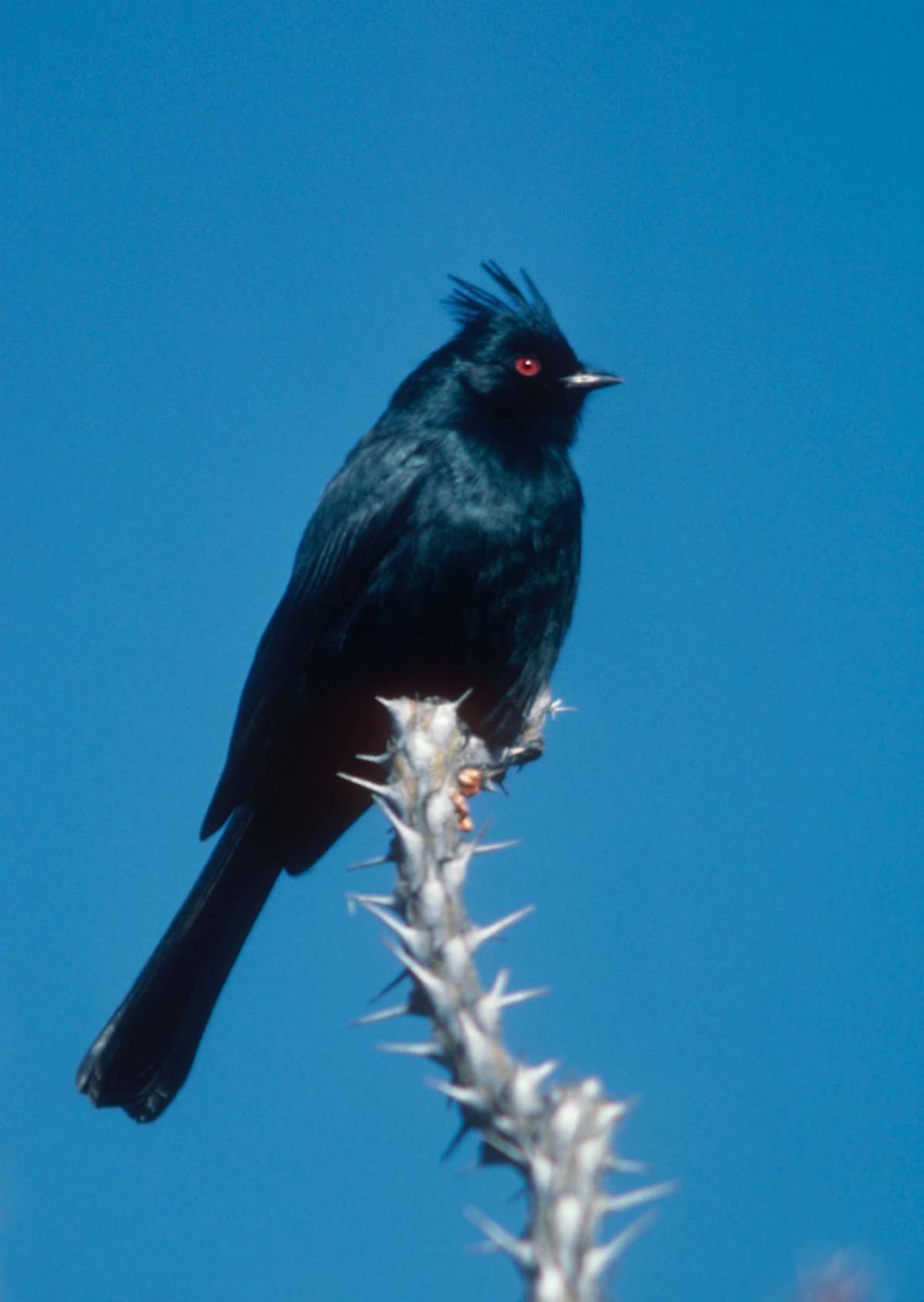 Tumacácori Bird Walks