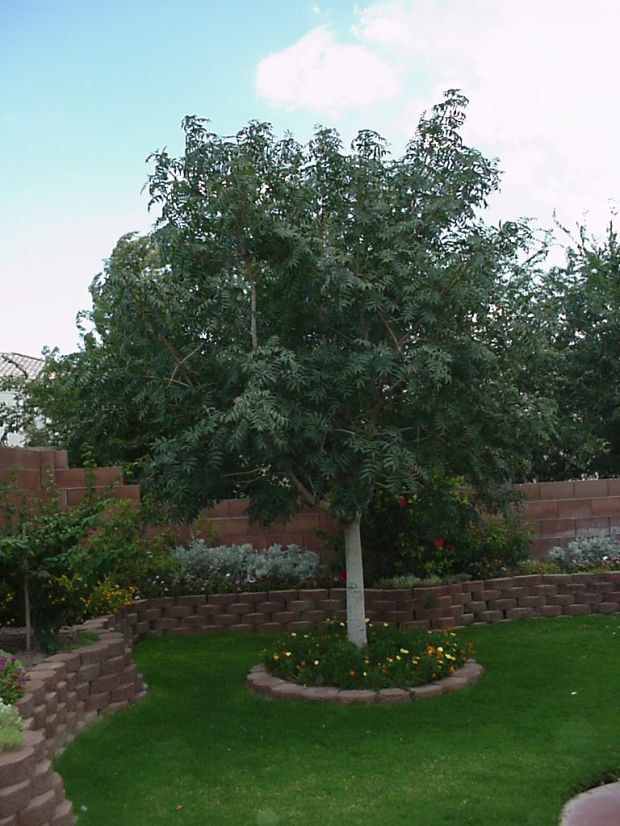 Park Ave Auto >> Business : Arizona Pistachio Nursery