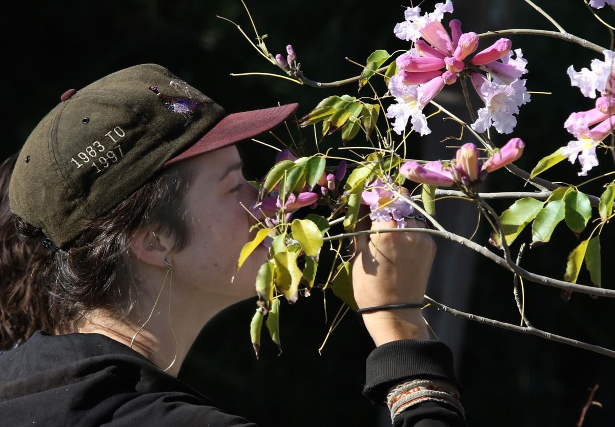 Spring sale blooms at Desert Survivors