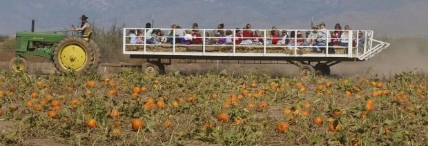 A bounty of fall festivities