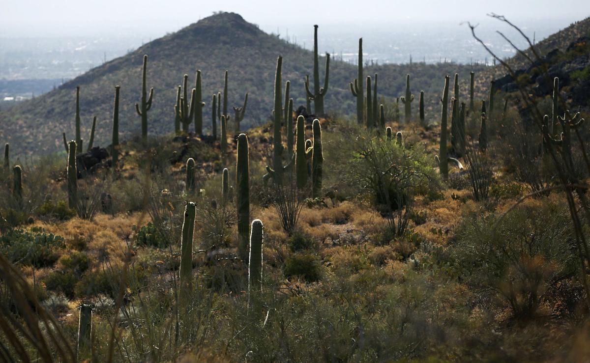 Saguaro National Park, West unit
