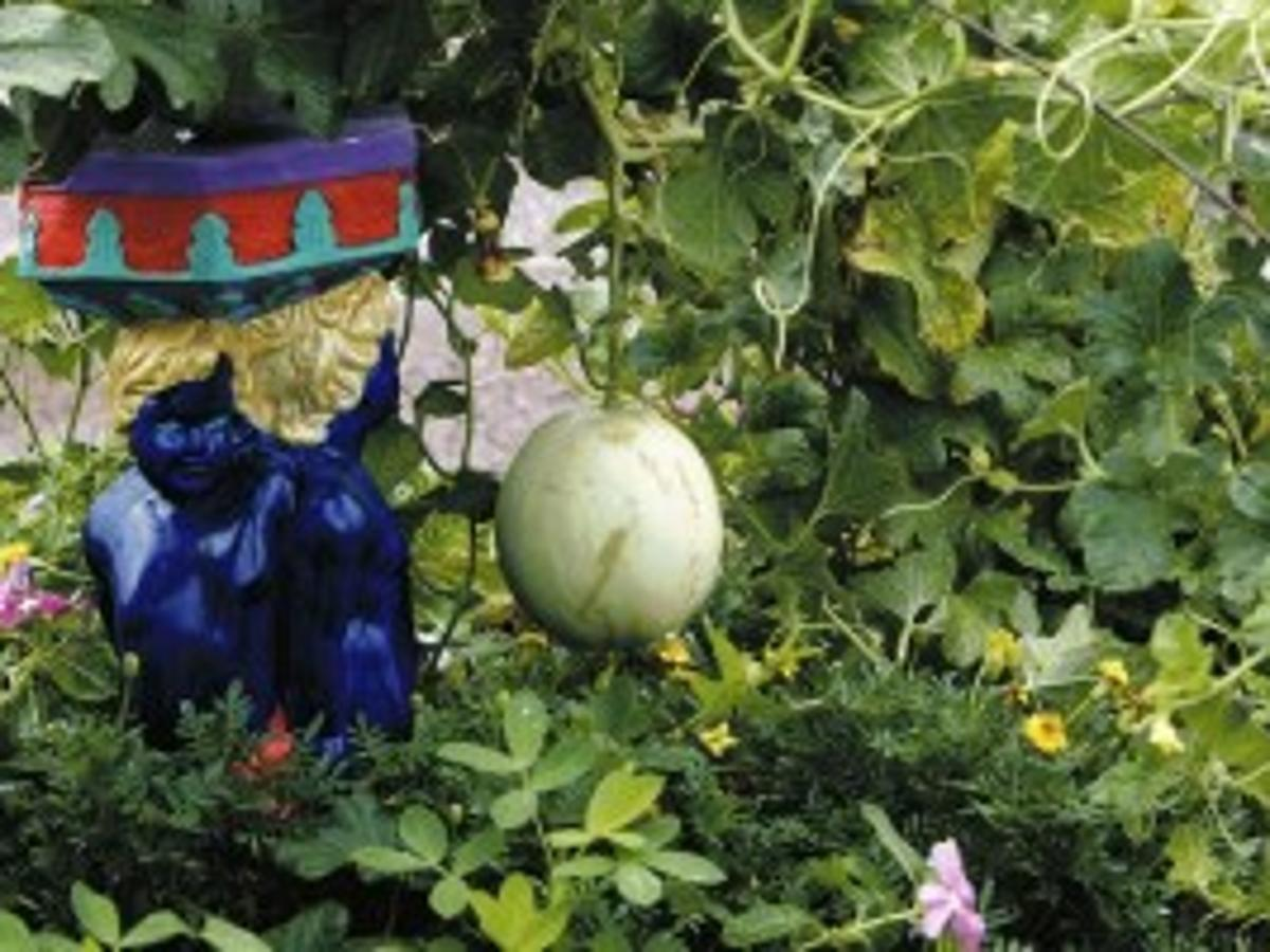 Heat Lovin Melons Grow Well In Tucson Tucson Gardens Tucson Com Tripadvisor has 2,274,547 reviews of arizona hotels, attractions, and restaurants making it your best arizona resource. heat lovin melons grow well in tucson