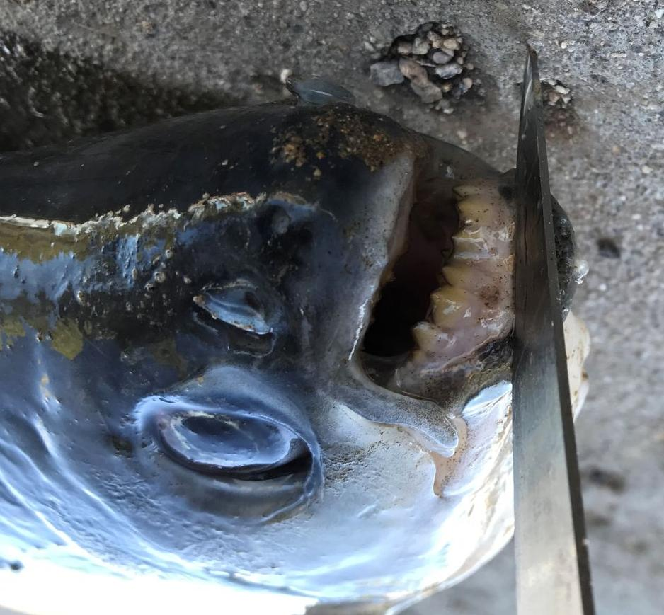 Fisherman catches unusual fish
