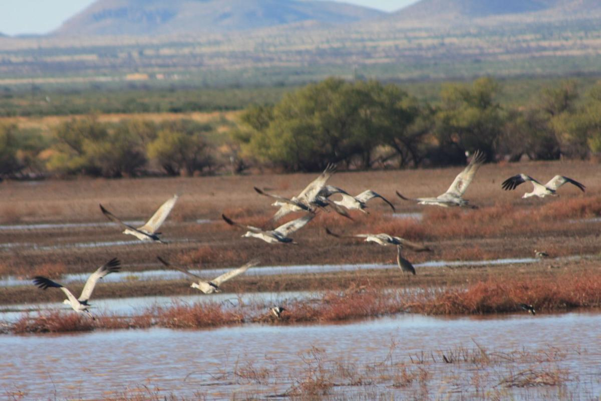 Thousands of sandhill cranes soar into southern arizona for Az game and fish draw results 2017