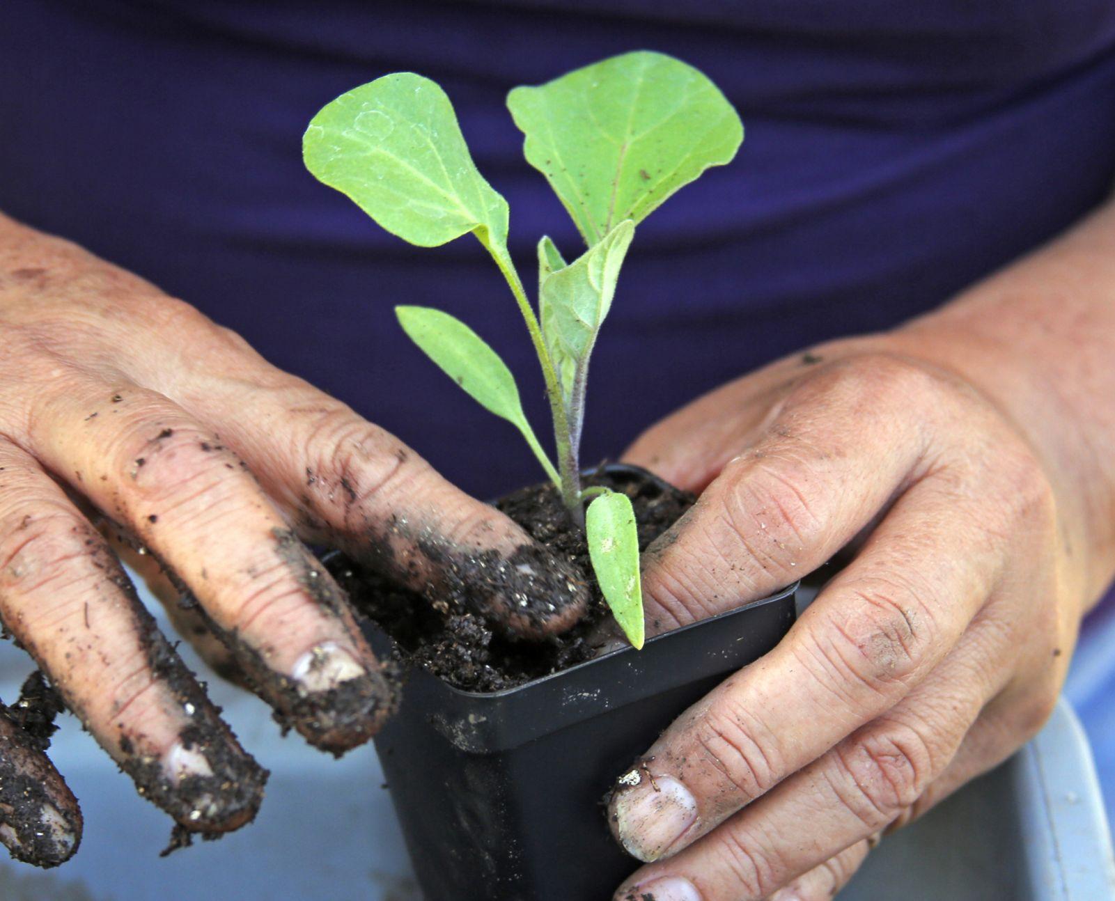 Tucson Organic Gardeners