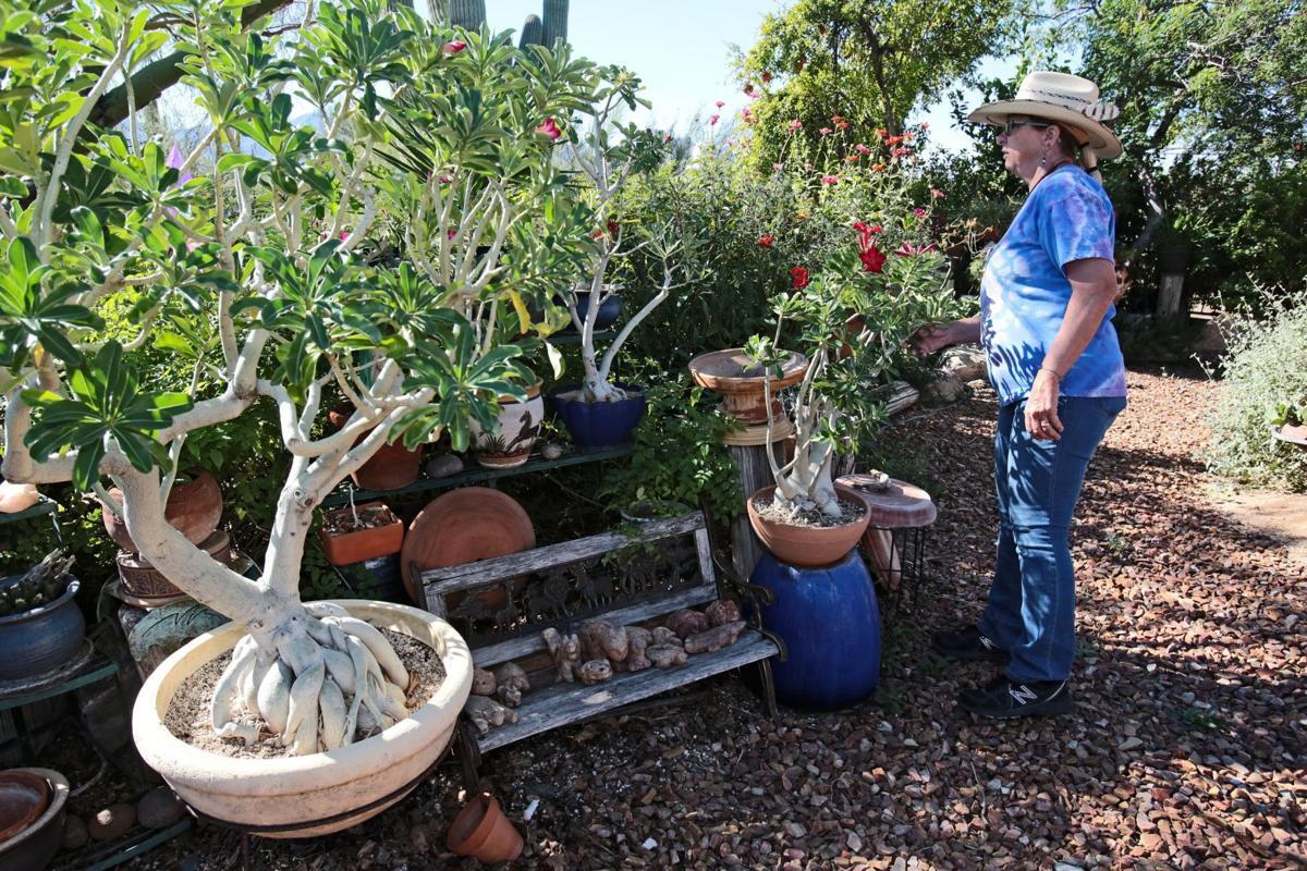 Tucson gardeners find indoor space for sensitive plants ...
