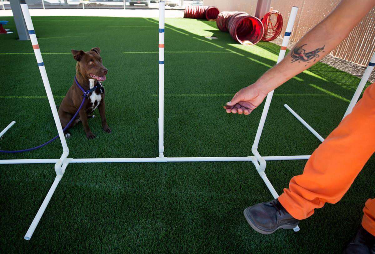DOC dog trainers