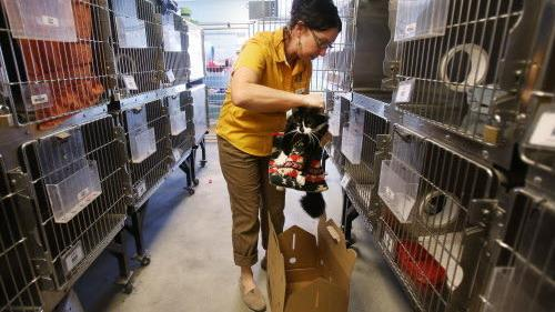 free veterinary care tucson
