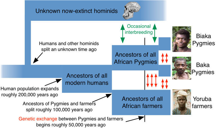 Estimated genetic history of Central African Pygmies
