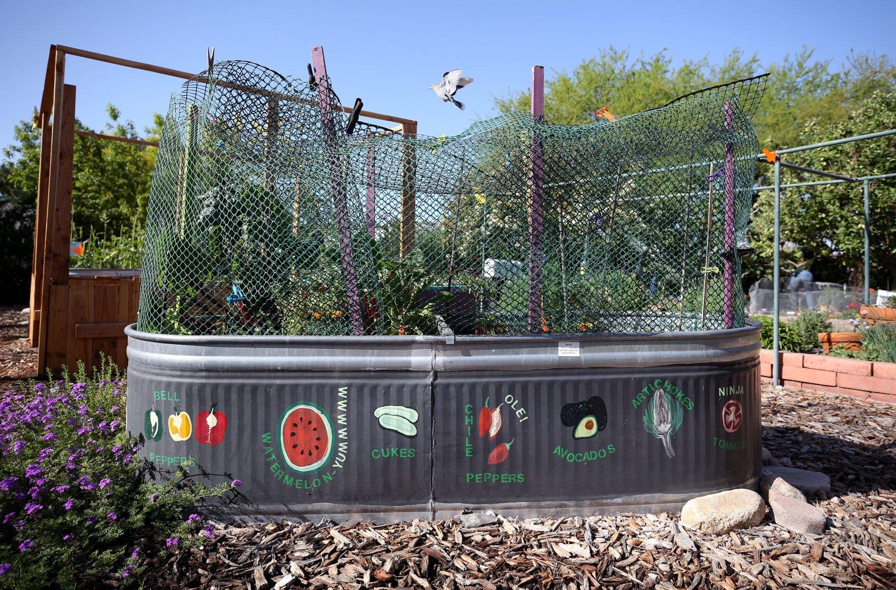 Superb Demonstration Garden Tours U2014 Pima County Cooperative Extension