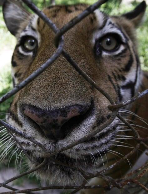 Animal shots of the week | Home + Life + Health | tucson com