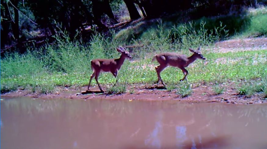Animals near San Pedro