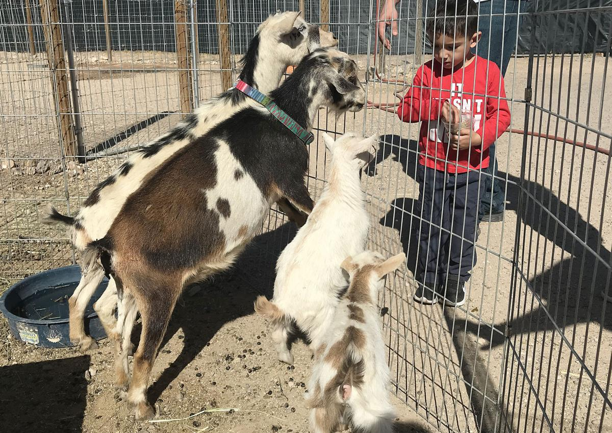 Snuggle some baby goats and capybaras at this Tucson petting