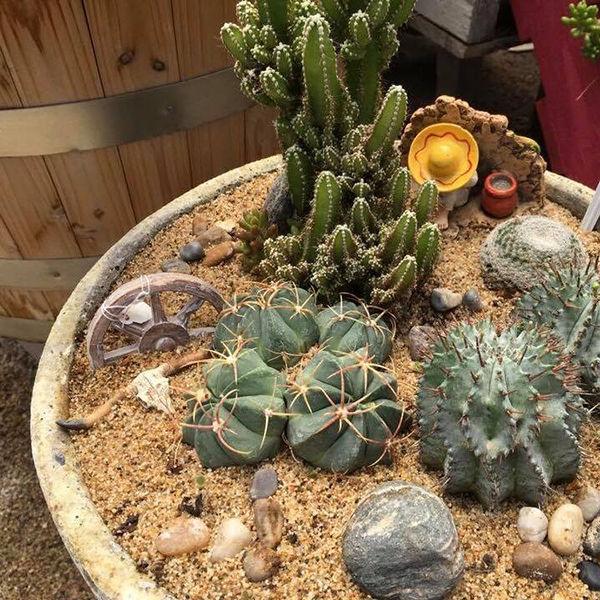 Cacti Garden Class