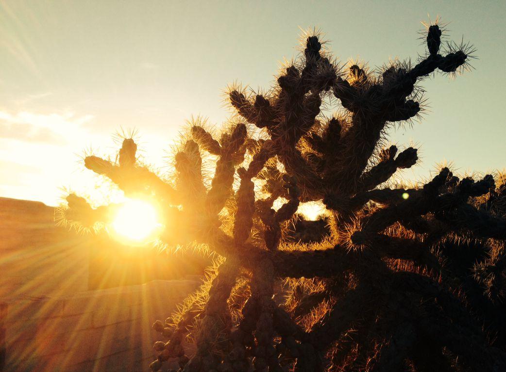 Desert glow at sunset
