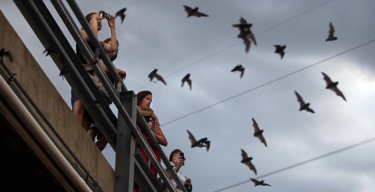 Bats take flight