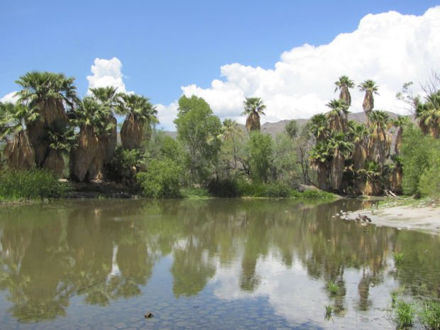 Agua Caliente pond on the rebound