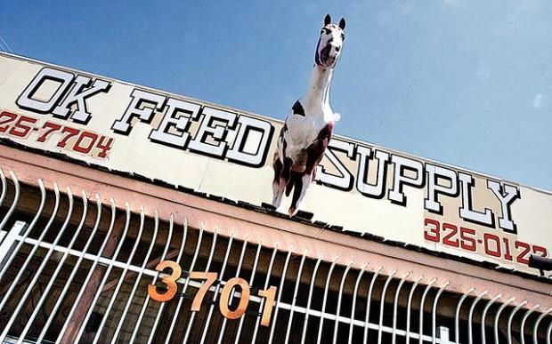 OK Feed & Supply's fancy horse
