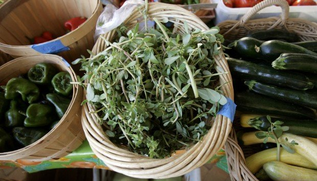 Neto's Tucson: Verdolagas, or Mexican watercress, a tasty part of our cultural heritage
