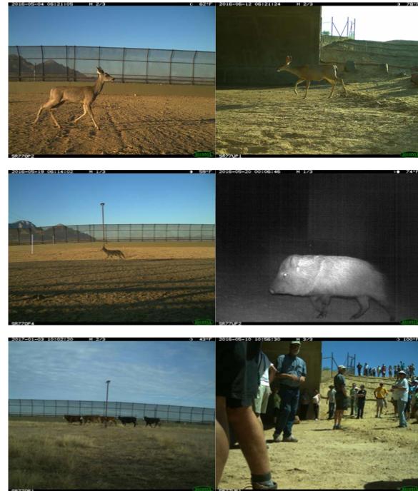 Wildlife crossing photos