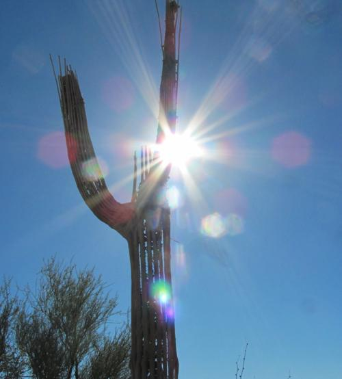 Skeleton saguaro stands tall in the sun (LE)