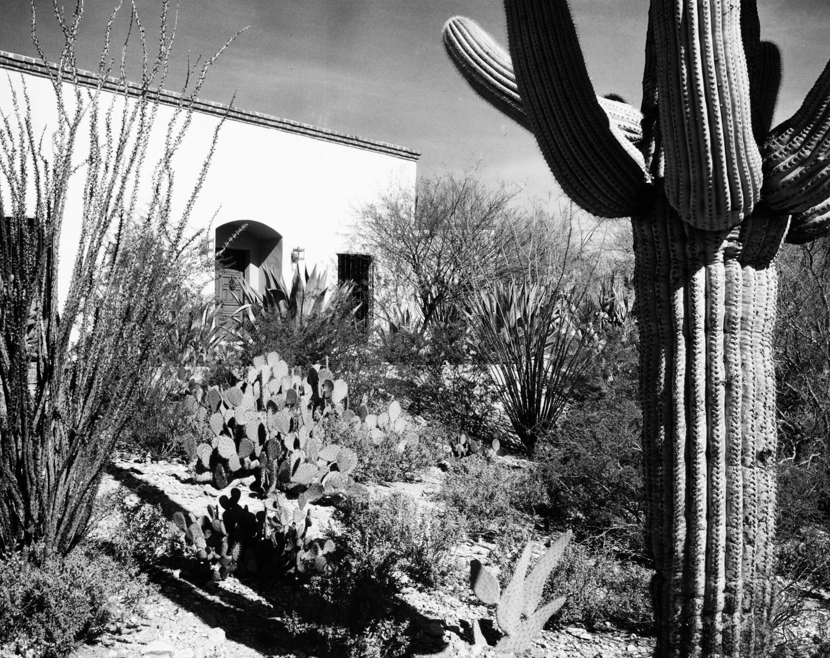 Harlow Gardens Gets A Look At Its Early Work In Tucson | Home U0026 Garden |  Tucson.com