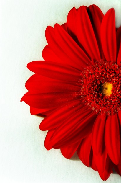 Bureau's stars for 2013 are wildflowers, gerbera daisies and watermelons
