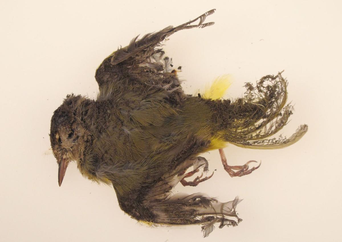 Solar plant scorches birds