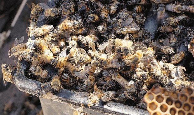The buzz on bees: Act now