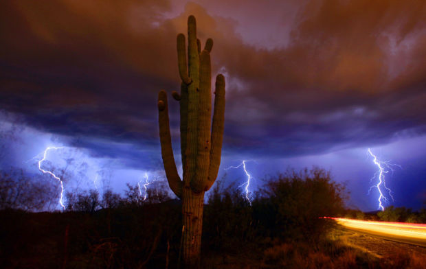 Saguaro cactus and lightning