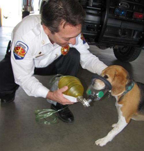 Couple donates pet breathing masks to Tucson-area fire department